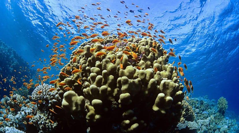 Phillippines-Tubbataha Reef