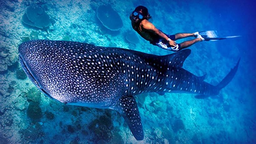 Maldives-Cocoa Island