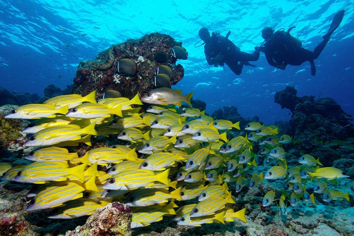 Maldives-Soneva Fushi