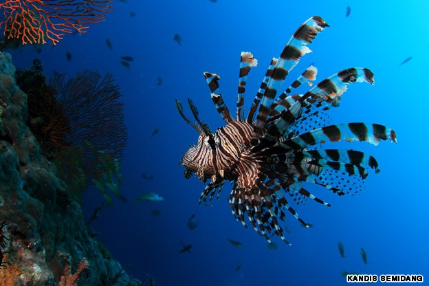 Myanmar-Mergui Archipelago