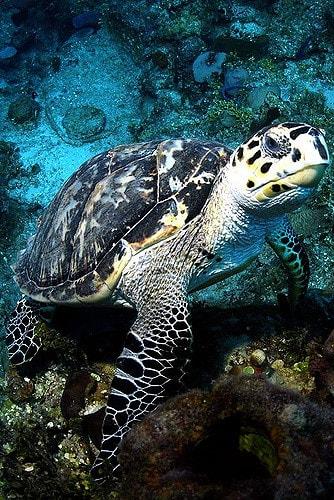 night dive bahamas