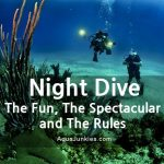 Night Diving – the Fun, the Spectacular and the Rules