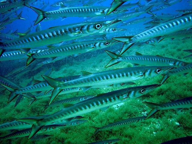 Dive Spot Barracuda